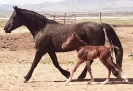 2021 Lippitt Foals
