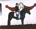 Grand Champion Stallions