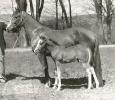 Lippitt Rosalie and foal, L. Roland